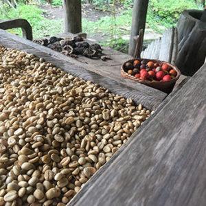 Guatemala Finca Ceylan  SHB EP – økologisk