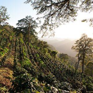 Nicaragua SHG EP San Juan del Rio Coco – økologisk