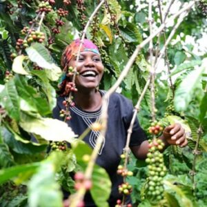 Uganda Wugar Bukonzo – økologisk