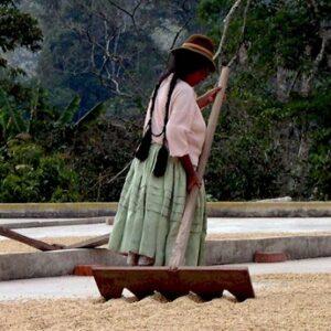 Bolivia Altura EP - økologisk (espresso)