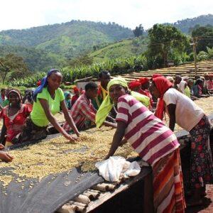 Etiopien Sidamo Suke Quto grade 1 - økologisk (espresso)